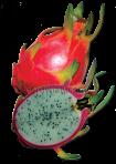 buah naga copy